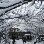 iarna la bunici